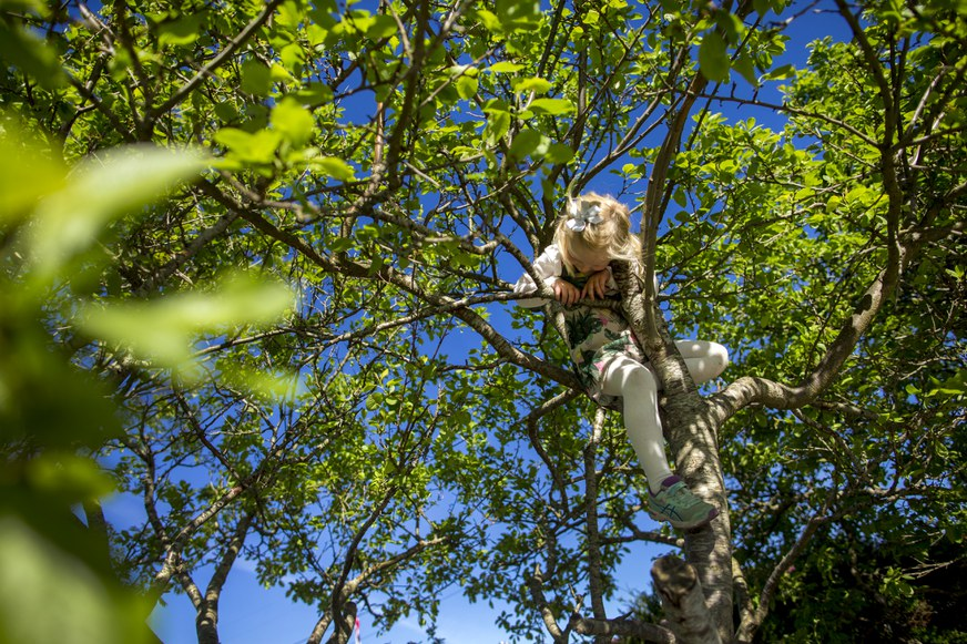 vardafjell barnehage klatre i trær